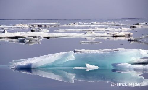 Paradis blanc, arctique et antarctique, arctic05, arctic4ever, relaxation, bonheur, inspiration, flore et faune polaire, glaces