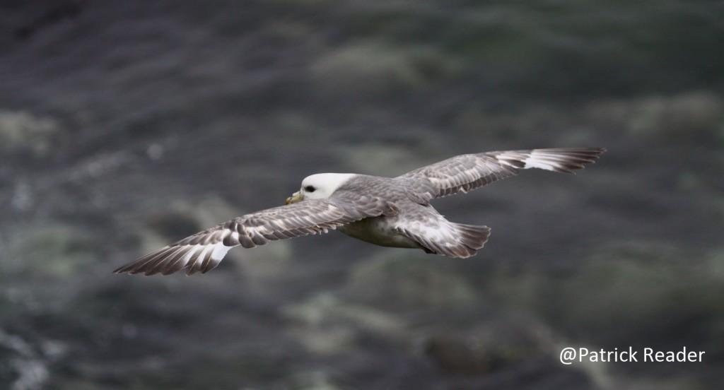 birdlow