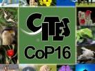 cop16_species_collage_x