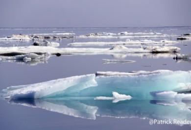 Noticias de los Hielos Articos!
