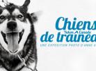 expo-photo-chiens-traineaux1