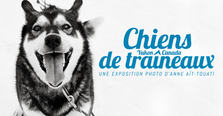 expo-photo-chiens-traineaux1