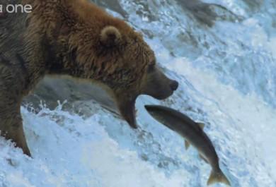 bbc bear