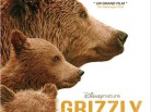 Affiche-Grizzly-445x593