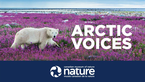 arctic voices - arctic exhibition - canada musuem