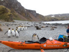 south georgia, south georgia island, manchot, île georgie du sud, kayak en georgie du sud, kayaking in south georgia, penguin, emperor penguin, south georgia penguins