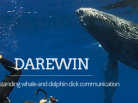 sperm whale, orcas, humpbacks, doplhins, darewin project, freediving, communicate with whales, cetacean, dauphin, baleine, whales, whales video, dolphin video, dolphin, ocean, big blue, grand bleu, ocean arctique, arctic ocean