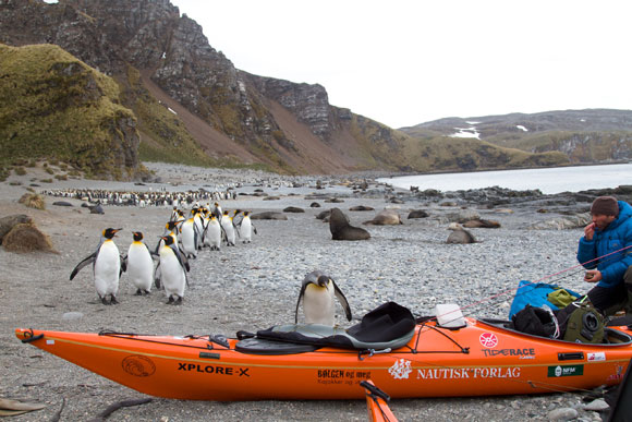 photo: SG2010, SG2010south georgia, south georgia island, manchot, île georgie du sud, kayak en georgie du sud, kayaking in south georgia, penguin, emperor penguin, south georgia penguins
