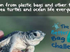 sea turtles, sea protection, plastic bags, world oceans day, 8th of june, plastic and sea pollution, marine mammals, dolphins, sharks, whales, the arctic ocean, turtles, reduce plastic,