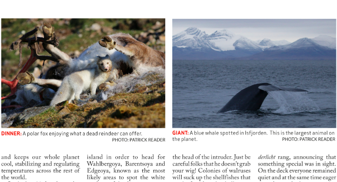 Patrick Reader, Svalbard, Arctic expert, polar bears, spizbergen,whales, wildlife photographer, the arctic, l'Arctique, feel inspired, walrus, arctic05, arctic news, arctic4ever, madgalena fjord, noorderlicht, iceberg
