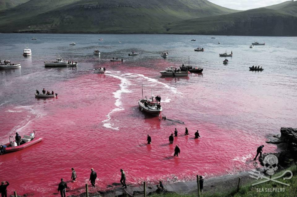 Photo- Sea Shepherd:Mayk Wendt