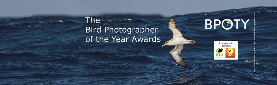 Bird photography of the Year, photo competition, arctic05, paul sterry, andrew cleave, birds lovers, ornithology, oiseaux, photos d'oiseau, concours photo, images d'oiseaux
