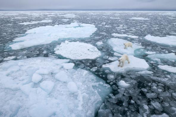 Kerstin Langenberger, Photo by Kerstin Langenberger, Arctic Dreams, Svalbard, Polar bear, ours polaire, www.arctic-dreams.com, arctic05 news, arctic photos, arctic pictures, climate change