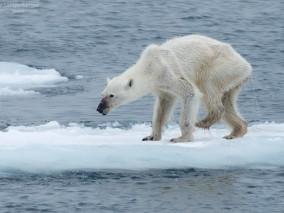 Sauvons ou coulons l'Arctique?