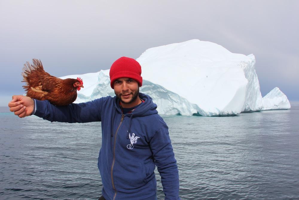 Guirec-et-monique, voyagedyvinec, tour du monde, poule, une poule en arctique, voile en arctique, groenland, upernavik, france, voile polaire
