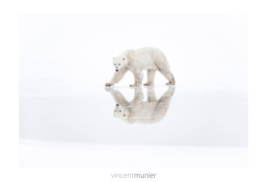 Vincent-Munier-grand-nord-livre-polaire-ARCTIQUE-arctic05-faune-et-flore-polaire-france - photographe animalier - arctic pictures, ice bear