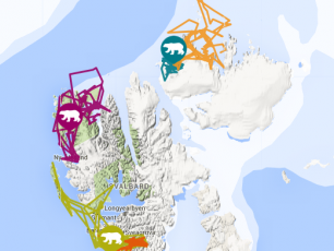 ours polaire, femelle ours, l'archipel du svalbard, female bear, bears in Svalbard, bear tracker, WWF arctic bear tracker, , climate change, spitzberg, longyearbyen, sauvons les ours, Isdimma3 N26243