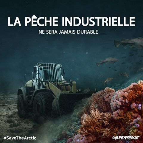pêche indistruelle, greenpeace international, ocean arctique, pêche abusive, bottom trawling, save the arctic, svalbard, cabillaud, ours, oiseaux, plastique, norway, we love the arctic copy, pétition