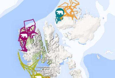 Svalbard bears, polar bear tracker, WWF, Norwegian Polar Institute, Ice bear, Polar bears in Svalbard, Arctic05, ours polaire, femelle ours, Spitsbergen, Snovit, Isdimma3 N26243  copy
