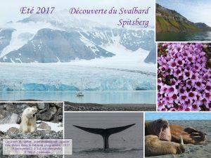 Fredoya, découverte du Svalbard Spitsberg, été 2017, océan arctique, ours polaire, baleine, morse, fleurs, front glacier, montagne, voile, voilier, faune polaire, cabotage en norvége