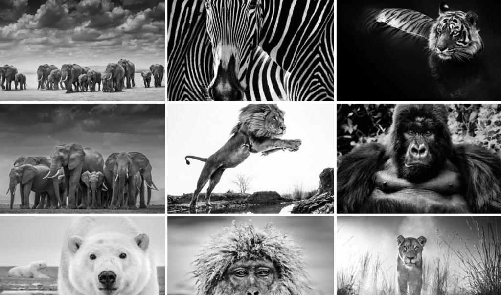 David Yarrow photography, wildlife photographer, elephant, zebra, lion, polar bear, arctic05, wild encounters, africa animals, photographie animalière, monkey, big five