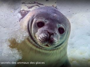 Arte France, Antarctique, Faune et Flore, Pôle Sud, Jérôme Bouvier, Marianne Cramer, Christophe Barbaud, chercheur au CNRS, faune antarctique, arctic05
