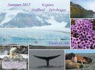 Fredoya, Summer 2017, Svalbard, Spitzbergen, expédition polaire, Arctic05, la voile au Groenland, Passage du Nord-Ouest, video polaire