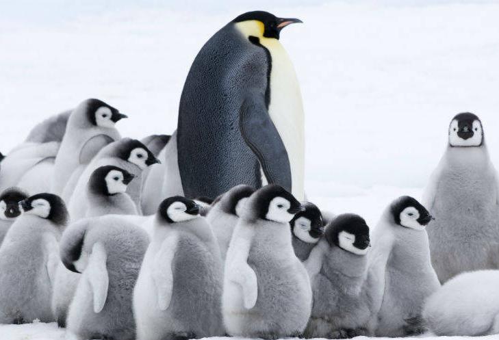 Film L'Empereur de Luc Jacquet, Pôle Sud, Manchot, Antarctique, penguins, arctic05, film polaire, calotte glaciaire, paysages magnifiques, climat, glace