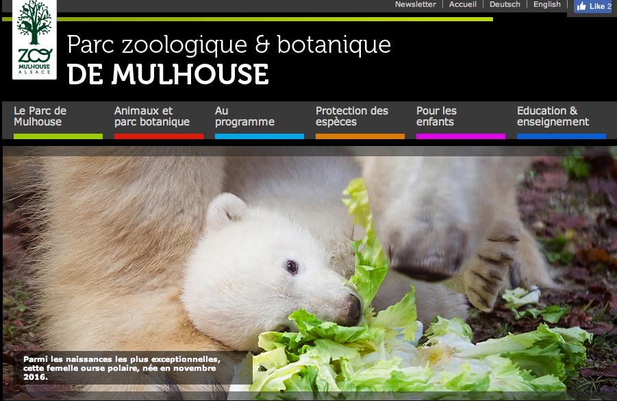 Mulhouse France, ours polaire, parc zoologique de Mulhouse, ourson, naissance de Nanuq, zoo, Arctic05, vidéo ours, Grand Nord, soigneur, vétérinaire, programme de protection des animaux, captivité, botanique