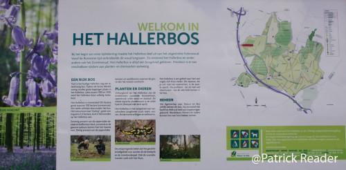 jacinthes des bois, Bluebell flowers, le bois de Halle, hyacinths, tapis de fleurs, Brussels, printemps, Welkom in het Hallerbos, randonnée, The Blue Forest, équitation, Belgique