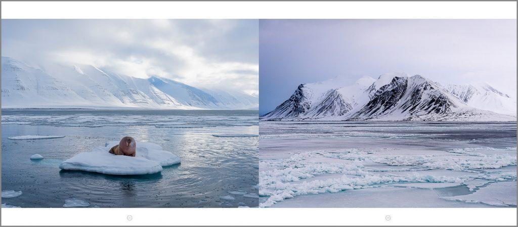 Philippe Bolle, photographie du Svalbard, Svalbard Expeditions, Arctic05, morse, paysage du Spitzberg, aventure photographique, livre polaire