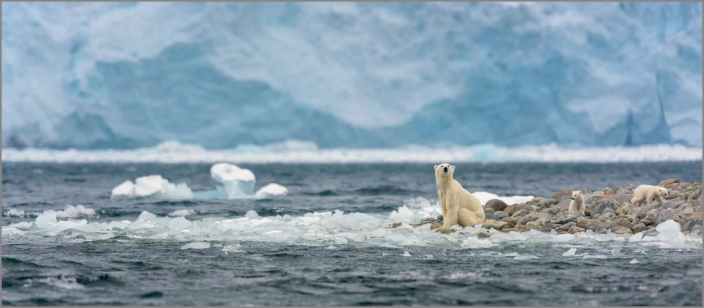 Photographie ours au Svalbard, Philippe Bolle, livre Svalbard expeditions, Arctic05, image oursons, ouvrage polaire, france