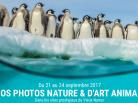 expos photos nature & d'art animalier, Namur, Belgique, Arctic05, photographie animalière, art, oiseaux, paysages, animaux, images animaux
