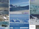 Fredoya, 2017, Svalbard, photo phoque, ours, glacier, arctic05, renard polaire, Spitzberg, Longyearbyen