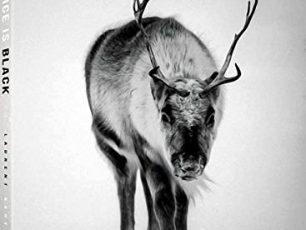 Ice is black, Laurent Baheux, Arctic photography, reindeer, polar bears, seals, walrusses, wildlife book & photos, Arctic05, iceberg, ice landscapes, beautiful arctic images