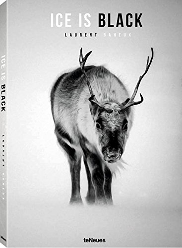 Ice is black, Laurent Baheux, Arctic photography, reindeer, polar bears, seals, walrusses, wildlife book & photos, Arctic05, iceberg, ice landscapes, beautiful arctic images