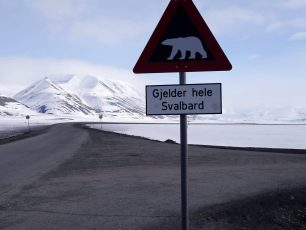 Svalbard, Polar bears, Longyearbyen, Arctic05, Norway, Russia, Pyramiden, Barentsburg, Grand Nord, North Pole, Pôle Nord, conquête de l'Arctique