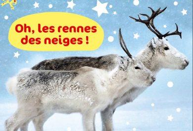 Wakou, Noël, Rennes, magazine enfants, 4 à 8 ans, neige, Grand Nord, Caribous, Père Noël, Arctic05, traineaux, transhumance, cariboux