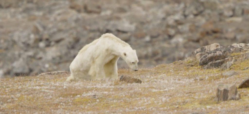 Paul Nicklen via Instagram, ours polaire, Terre de Baffin, Canada