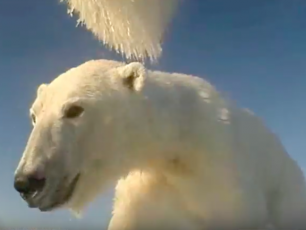 Polar Bears Film Their Own Sea Ice World, Alaska, Beaufort Sea Ice, USGS, seals, arctic bear video, pack-ice, seals, Arctic05, resaerch scientist, climate change, arctic ocean